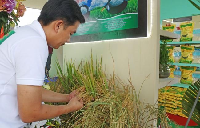 8. The 3rd Vietnam Rice Festival