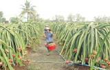 Tái cơ cấu ngành Nông nghiệp: Tiếp tục rà soát, điều chỉnh, bổ sung quy hoạch, tập trung nguồn lực đầu tư