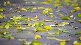 Lời tỏ tình của mùa thu