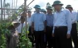 Phó Thủ tướng Vũ Văn Ninh thị sát một số mô hình sản xuất kinh doanh