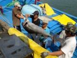 Doanh nghiệp Nhật muốn đầu tư chế biến cá ngừ tại Phú Yên
