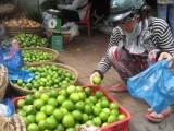 Thương lái ngừng mua, người trồng chanh khóc ròng