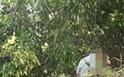 Phát hiện thi thể người đàn ông trong tư thế treo cổ trên hàng cây