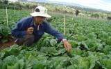 """Thiếu chính sách """"đòn bẩy"""" để nông dân liên kết phát triển nông nghiệp"""