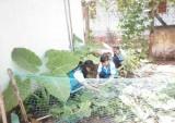 Vườn rau trong trường học