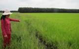 Vụ ngang nhiên đắp bờ ngăn dòng nước gây thiệt hại sản xuất lúa