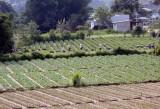 Thủ tướng yêu cầu đẩy mạnh thực hiện tái cơ cấu nông nghiệp