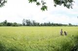 FAO: Kết quả xóa đói giảm nghèo của Việt Nam sẽ còn tốt hơn nữa