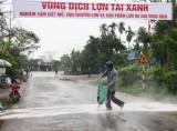 Dịch heo tai xanh tái phát tại Tiền Giang và Hà Tĩnh