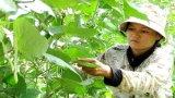 Bảo đảm an toàn thực phẩm trong lĩnh vực nông nghiệp