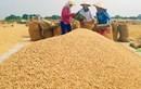 Thị trường lúa gạo sôi động đến đầu 2016