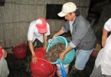 Hiệu quả từ chuyển đổi cơ cấu cây trồng, vật nuôi