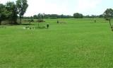 Vĩnh Hưng chỉ gieo sạ được 10% diện tích lúa Đông Xuân