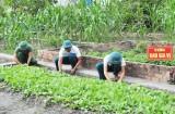 Ban Chi huy Quân sự huyện Thủ Thừa tăng gia sản xuất, cải thiện tốt đời sống bộ đội