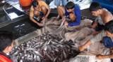 Cận tết, dân miền Tây tổn thất 25 tỉ đồng vì cá chết