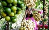 Nông nghiệp Việt cần tăng chất sản phẩm để bứt phá trong TPP