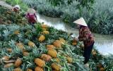 Hỗ trợ đầu ra cho nông sản, nông dân vui như tết
