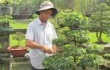 Phát triển kinh tế nhờ trồng kiểng bonsai
