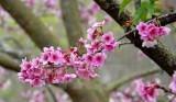 Các nghệ sỹ nổi tiếng tham gia Lễ hội hoa anh đào Hạ Long