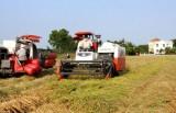 Cần Đước: Phát triển nông nghiệp chất lượng cao, bền vững