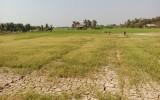 Đức Huệ: Mặn xâm nhập sâu vào nội đồng