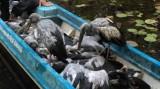 Khu bảo tồn đất ngập nước Láng Sen tiếp nhận 35 con cò nhạn trả về thiên nhiên