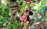 Phát triển đặc sản Việt: Nhà nước phải chủ trì