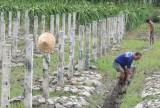Long An: Chuyển đổi cơ cấu cây trồng, vật nuôi phù hợp với biến đổi khí hậu