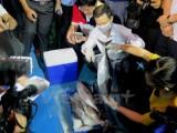 Lập hội đồng khoa học quốc gia để tìm nguyên nhân cá chết