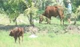 Bến Lức: Khuyến nông, chuyển giao kỹ thuật sản xuất thích ứng biến đổi khí hậu