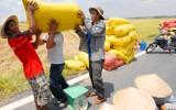 Giá gạo Thái Lan bật tăng đẩy giá gạo Việt tăng
