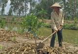 Tân Thạnh: Phát huy vai trò người cao tuổi