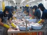 Chất lượng hải sản xuất khẩu không bị ảnh hưởng vì hiện tượng cá chết