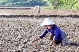 Nông dân Cần Đước: Nhiều khó khăn trong vụ Hè Thu 2016