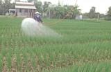 Cần Đước: Phát triển nông nghiệp toàn diện, chất lượng cao và bền vững
