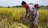 Khám phá máy cắt lúa vùng đồng trũng nâng cao gấp 10 lần năng suất