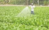 Phát triển nông nghiệp công nghệ cao - Yêu cầu tất yếu