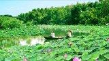 Long An: Cải tạo, chỉnh trang Khu Du lịch sinh thái Làng nổi Tân Lập