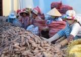 Trung Quốc tăng rào cản kỹ thuật với nông sản Việt Nam