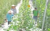 Ứng dụng sản xuất nông nghiệp công nghệ cao