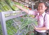 Khai trương điểm bán rau an toàn đầu tiên ở Long An