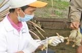 Chủ động phòng, chống dịch bệnh đối với gia súc, gia cầm