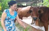 Hiệu quả từ tổ góp vốn của phụ nữ xã Tân Phú