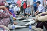 Cá bè lại chết, dân bức xúc đổ cá ra quốc lộ