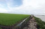 Chủ động phòng, chống lụt bão, bảo vệ lúa Đông Xuân sớm