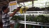 Đưa rau an toàn vào chợ