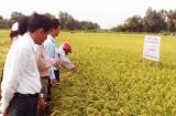 Vĩnh Hưng phấn đấu có 5.000ha lúa ứng dụng công nghệ cao vào năm 2020