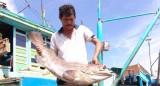 Kim ngạch xuất khẩu nông lâm thủy sản 11 tháng đạt 29,1 tỷ USD
