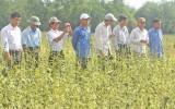 Sức bật từ phong trào Nông dân sản xuất, kinh doanh giỏi