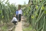 Châu Thành: Đánh giá kết quả mô hình tưới tiết kiệm nước trên cây thanh long